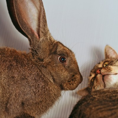 s bunny and cat