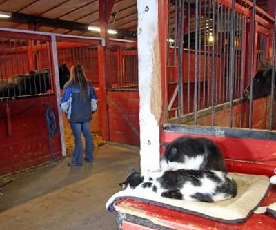 s inside barn