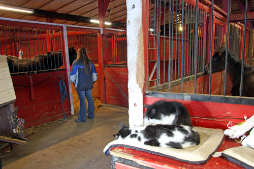 S Inside Barn Another Idea Is To Make Use Of Our Facility And Even Some The Animals For Therapy Counseling People